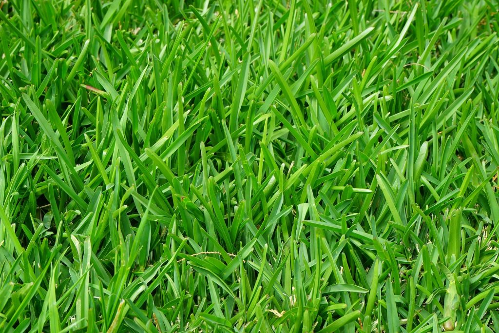 Blades of grass with mulch.