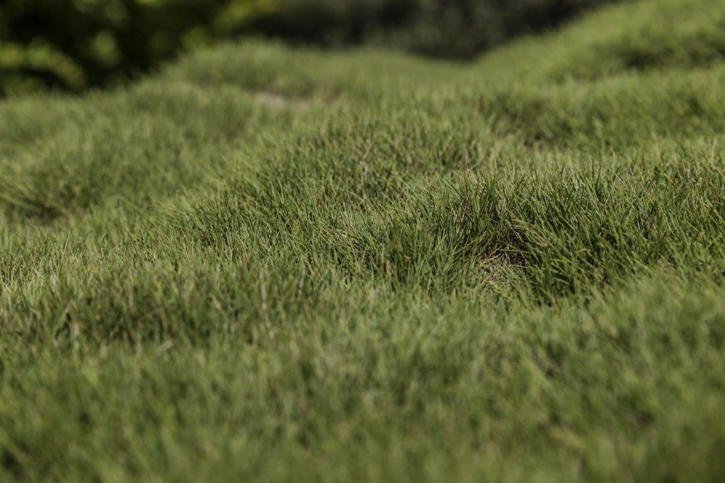 Bumpy, uneven lawn.