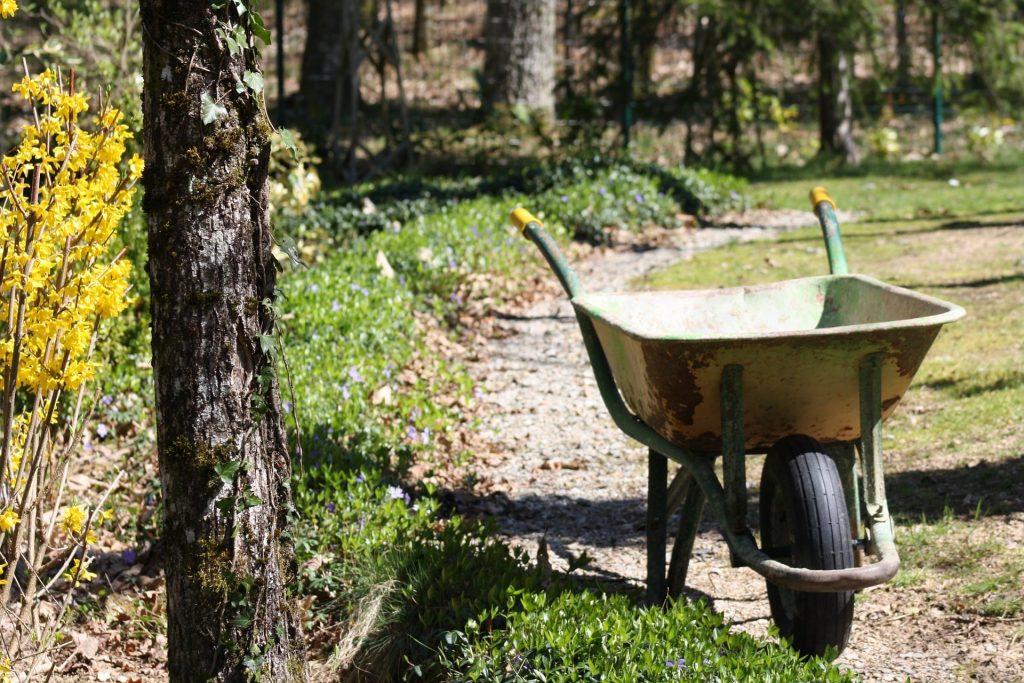 Empty wheelbarrow in a forest.