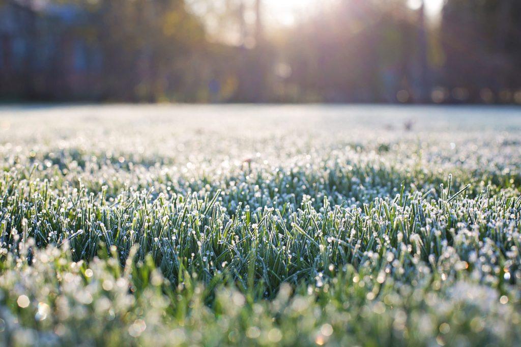 Frosty grass.