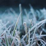 When Does Grass Stop Growing In Winter?