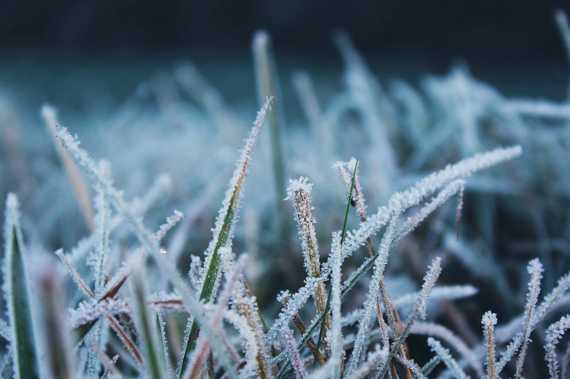 Frost on a lawn.