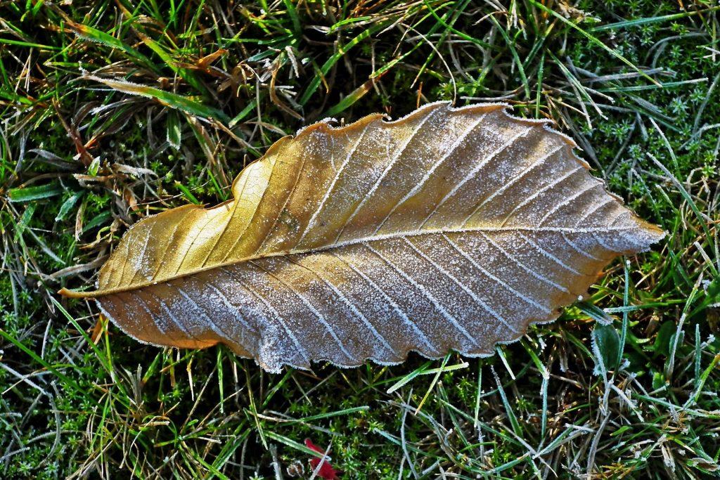 Leaf on frosty grass.