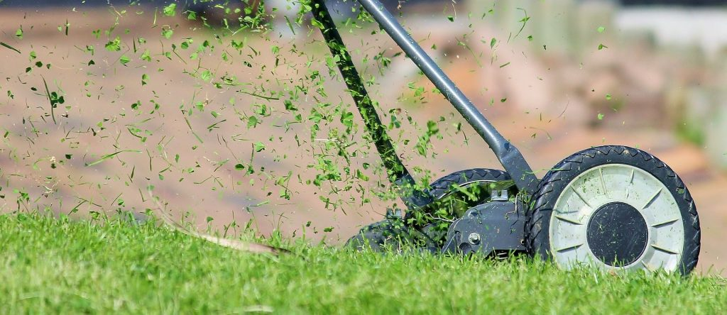 Grass being cut by a lawn mower.