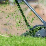 When To Cut New Grass: The Ultimate Guide