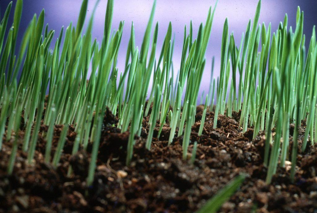 Grass growing.