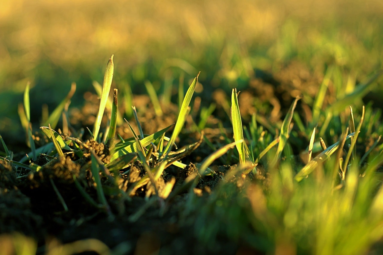 Grass growing in the soil.
