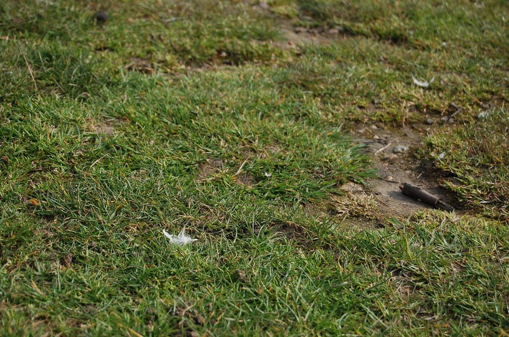 Grass with bare patches.