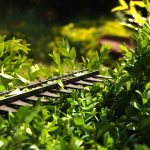 5 Best Petrol Hedge Trimmers | Long Reach | UK