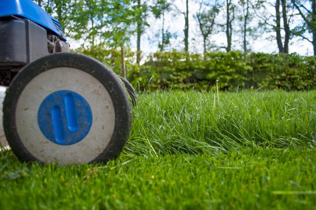 Rotary lawn mower cutting grass.