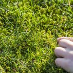 How To Remove Moss From Your Lawn (And Stop It Returning)