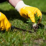 How To Repair A Lawn Full Of Weeds | The Ultimate Guide