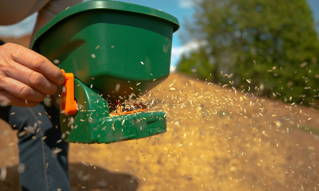 Person scattering grass seeds with a spreader.