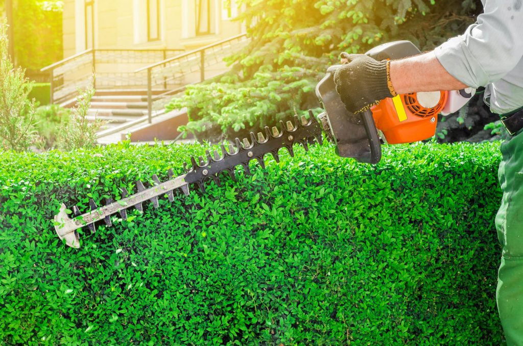Petrol hedge trimmer.