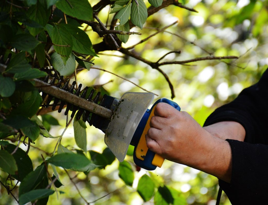 Man using a petrol hedge trimmer.
