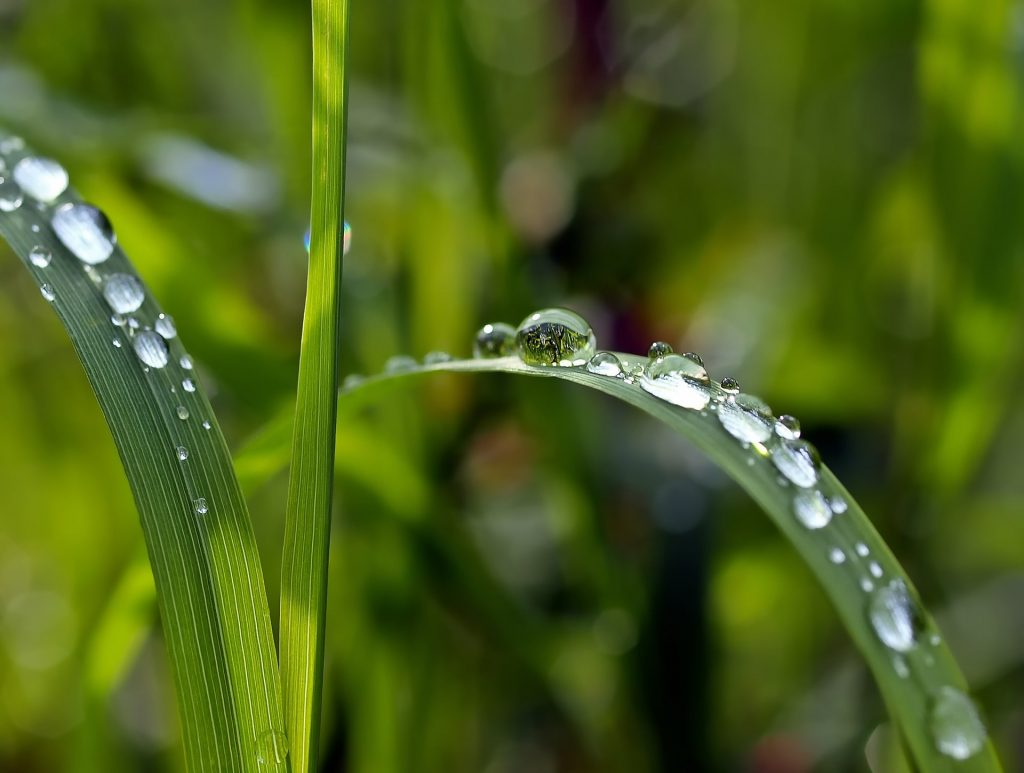 Blade of grass covered in water.