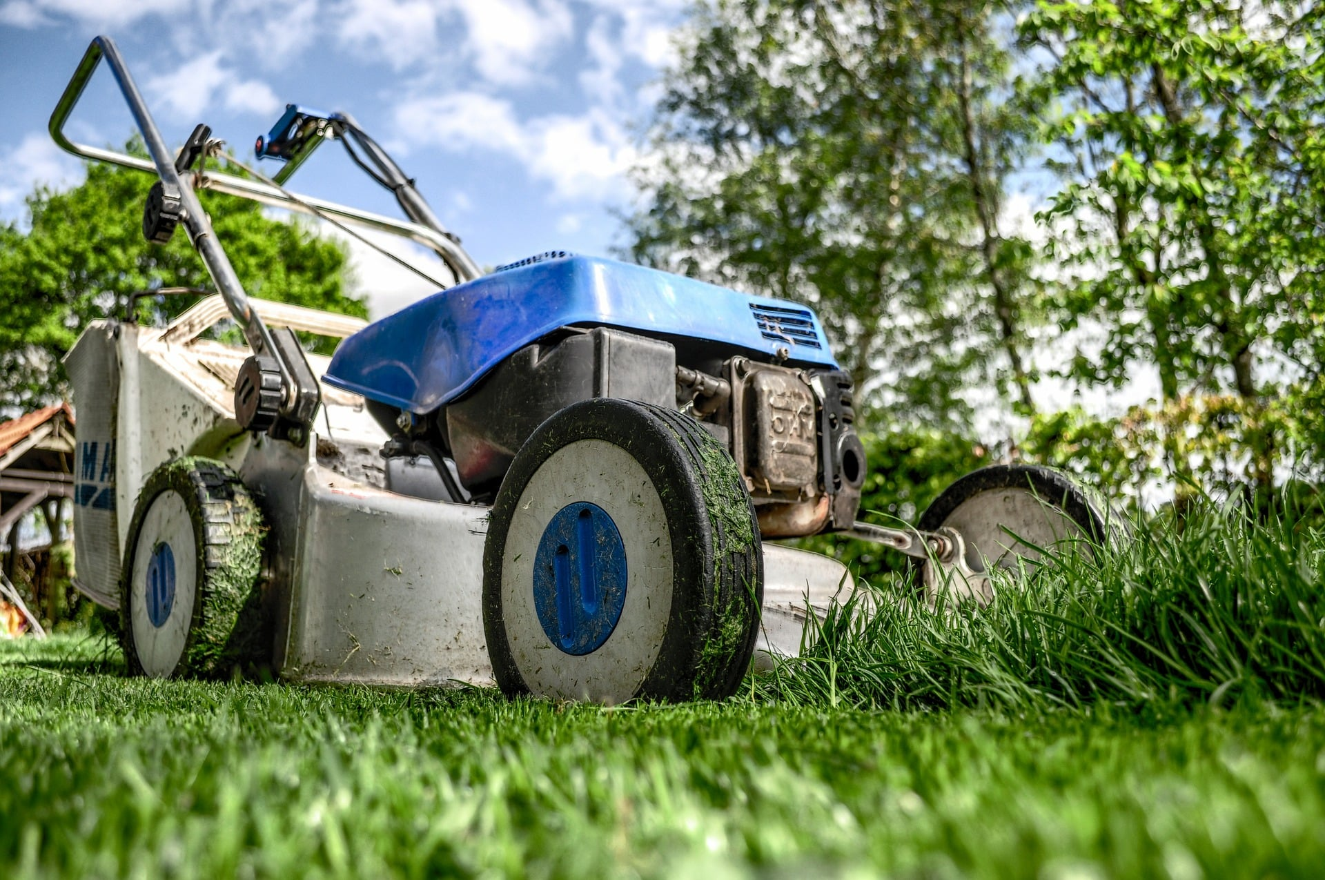 Petrol lawn mower cutting grass.