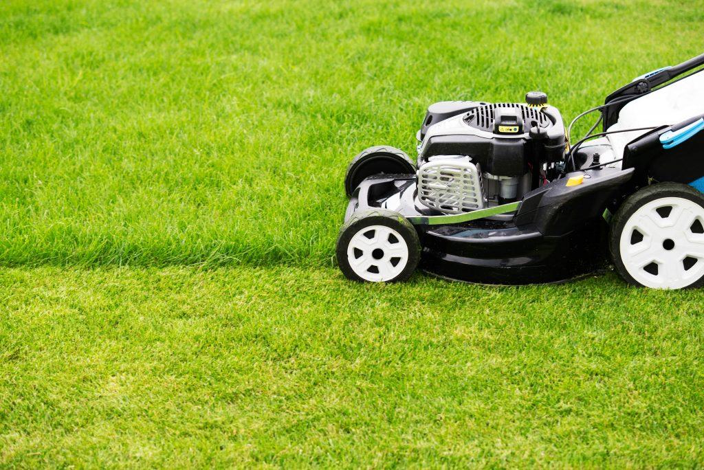 Petrol lawn mower.