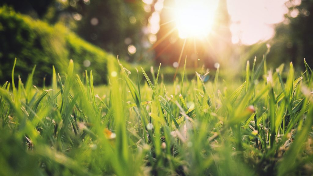 Sun shining on grass in the spring.