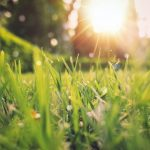 Lawn Care Calendar   UK   Spring, Summer, Autumn, Winter