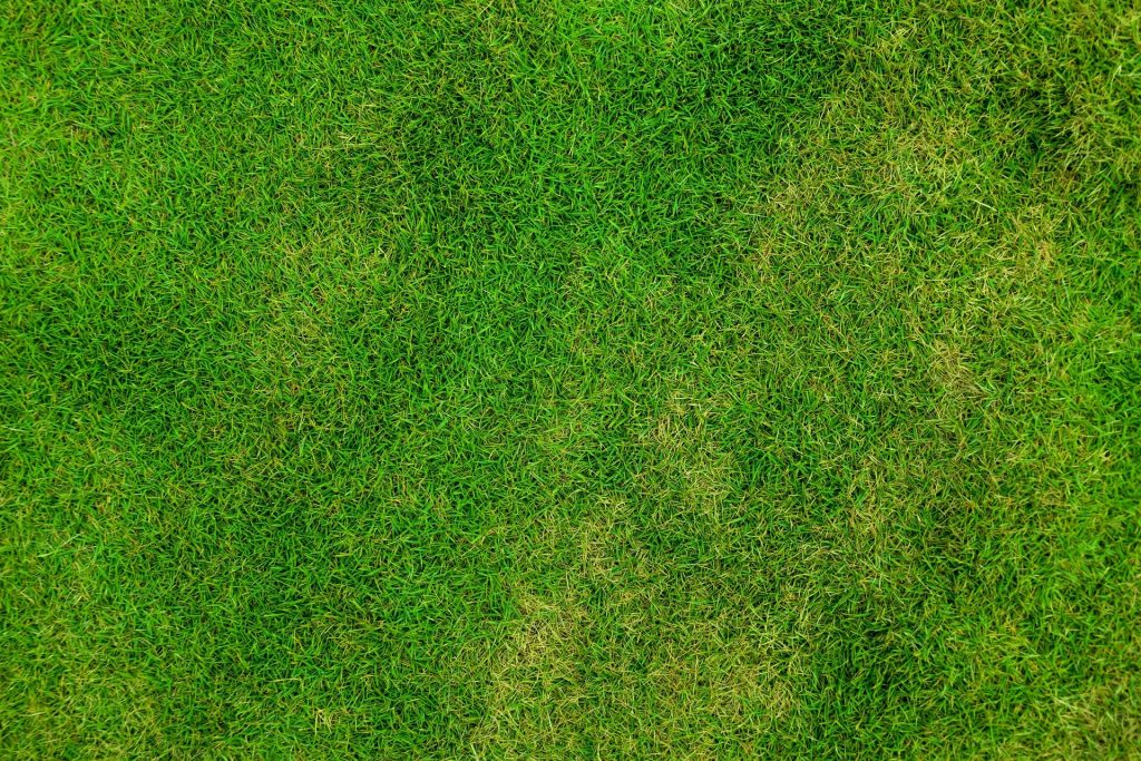 Top down view of a lawn.