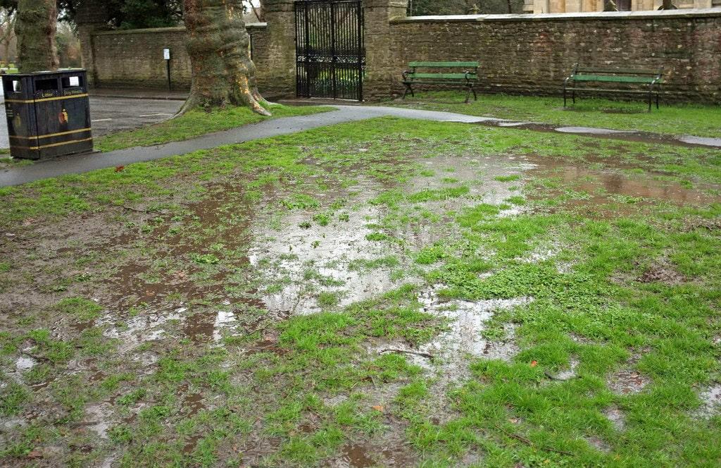 Waterlogged grass.