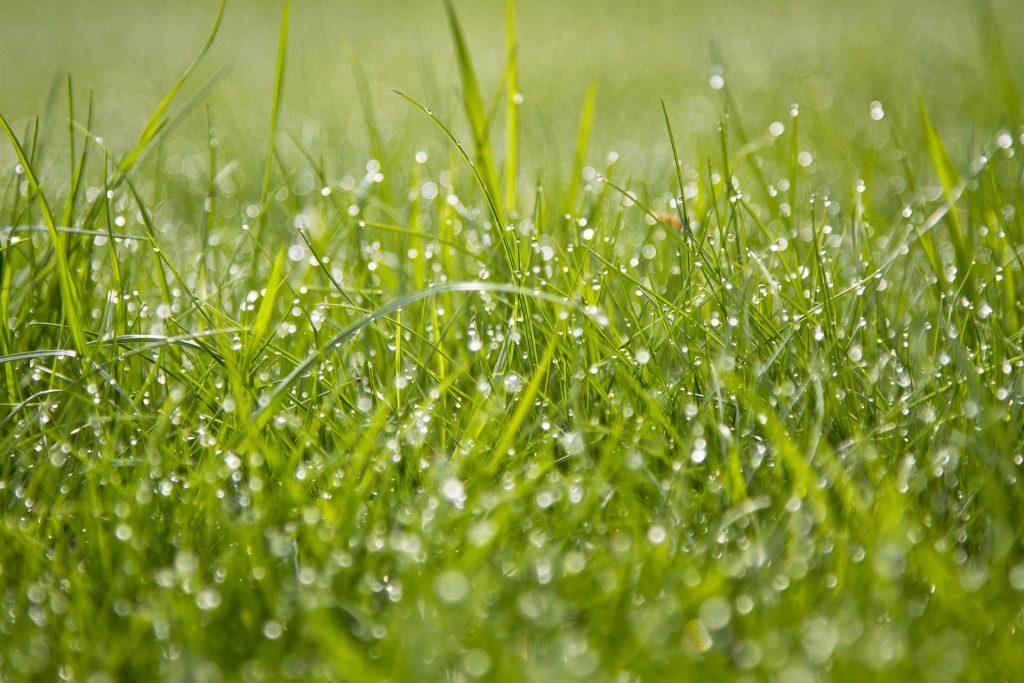 Wet green grass.