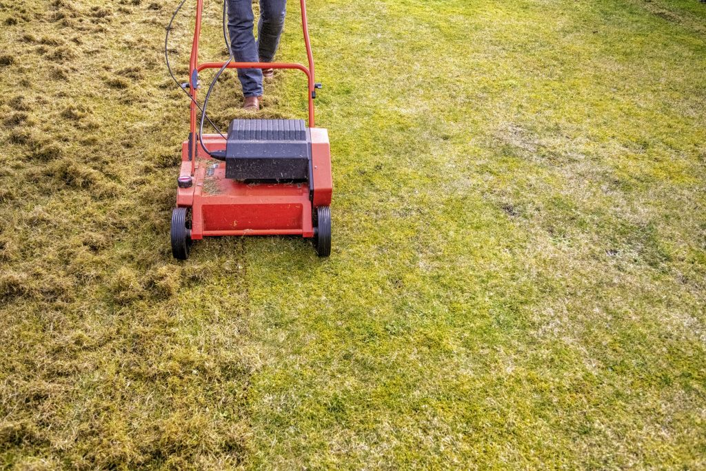 Effect of scarifying on the look of a lawn.